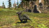 Final Fantasy XIV: Amaro Hatchlings and You